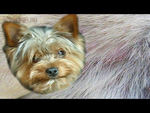 Зуд у собак | Причины | Симптомы | Лечение.