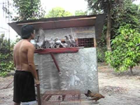 Pag-iwas at paggamot ng mga worm sa isang bata