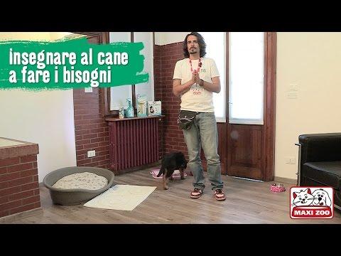 TUTORIAL: Insegnare al cucciolo a non sporcare in casa | Maxi Zoo