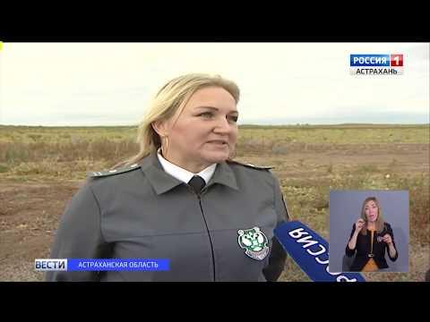 Управлением Россельхознадзора проведено обследование земельного участка в Астраханской области на наличие карантинного вредителя - дынной мухи