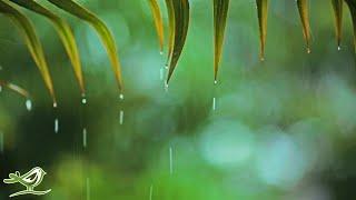 Relaxing Piano Music & Rain Sounds 24/7
