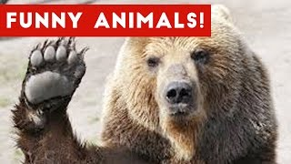 Funniest Animal Clips & Outtakes Of December 2016 Weekly Compilation  Funny Pet Videos