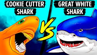 Small Shark With Scary Bite Even Great Whites Fear