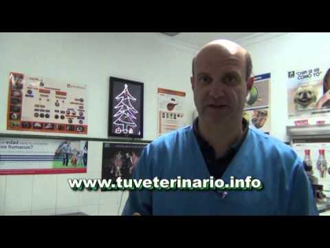 Ataques de asma en osteocondrosis