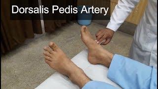 Dorsalis Pedis Artery Clinical Examination