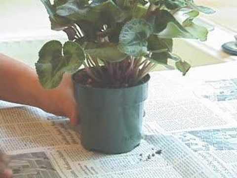 How to Get Rid of Indoor Gnats