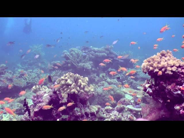 Dive Fiji:  The Rainbow Reef!