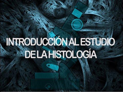 Tejidos - Conceptos básicos | Histología
