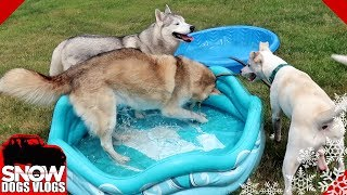 Dog Pool Party on Game Night
