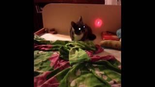 Мой кот светыч!!!!!!!