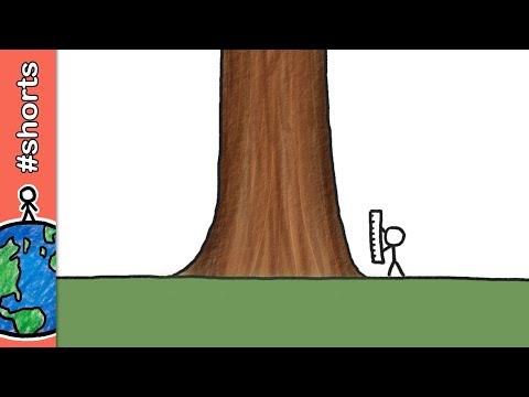 Qual é o ser vivo mais alto da Terra?
