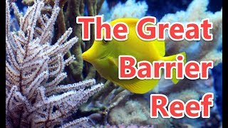 14 Interesting Facts About The Great Barrier Reef