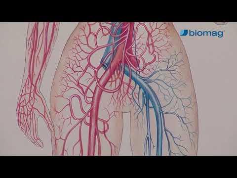 Acinus a prosztatarák adenokarcinómája Gleason pontszám 7