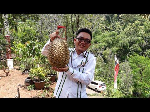 Durian Montong Hasil Kebun Sendiri-Pesanan Teman Dari BPJS Ketenagakerjaan