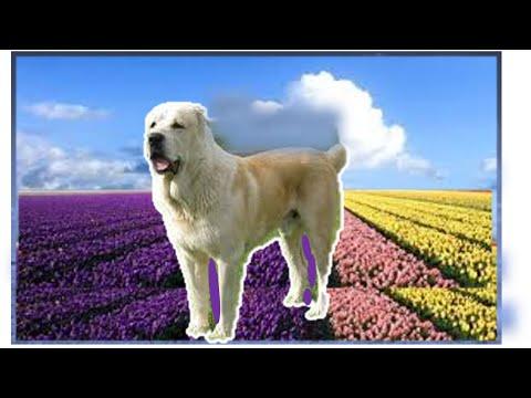 Бурсит  у   собаки . Рекомендации    хозяевам   собак