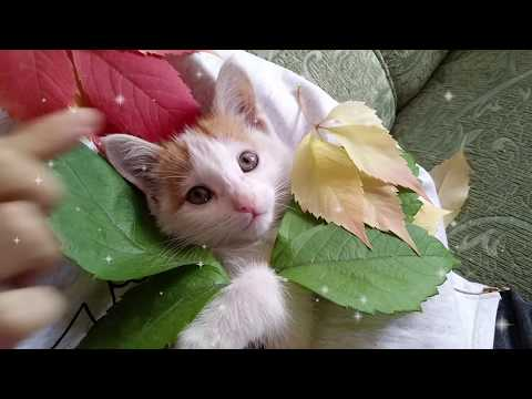 Cute Baby Kitty Eat Rose Petals And Lies Nearby