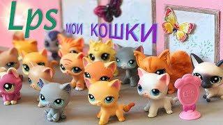 LPS/ моя КОЛЛЕКЦИЯ КОШЕК 🐱/cat collection Littlest pet Shop
