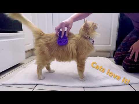Cat Zoom Groom Video