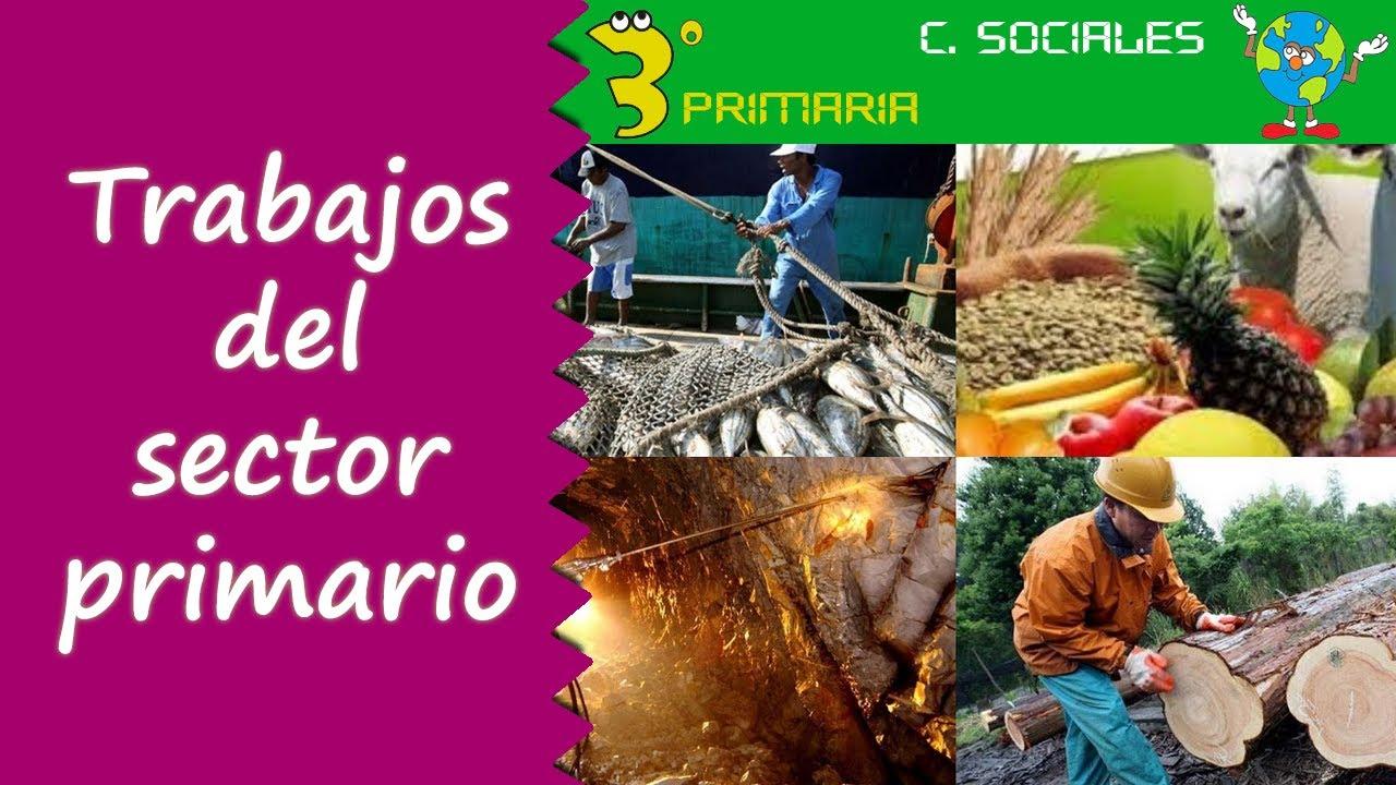 Ciencias Sociales. 3º Primaria. Tema 5. Trabajos del sector primario