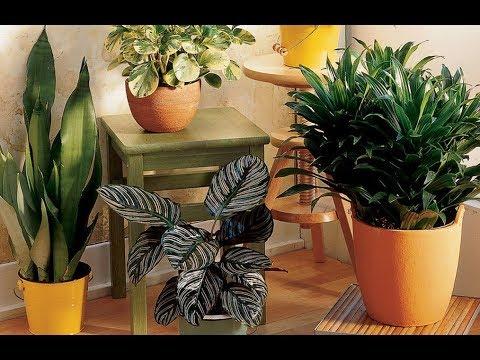 Почему ВЯНУТ комнатные растения? Что делать? ОШИБКИ в уходе за домашними цветами и их исправление