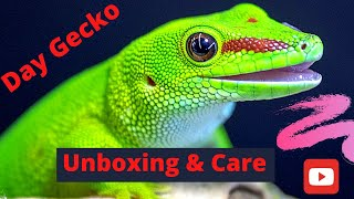 DAY GECKO UNBOXING: How To Setup Enclosure & Care! (2020)