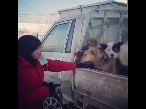 """В Мархе работники """"Жилкомсервиса"""" выловили почти всех собак"""