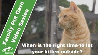When is the right time to let your kitten outside? - Companion Animal Vets