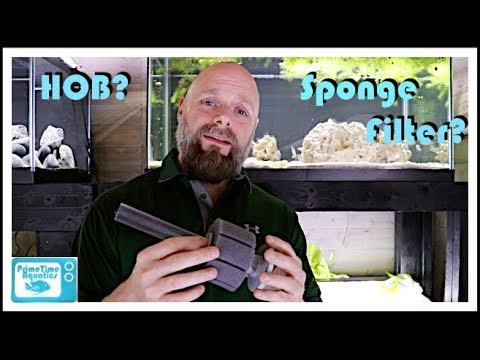 Fish Tank Filter Showdown! Sponge Filter vs. Hang on Back