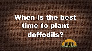 Q&A – When is the best time to plant daffodils?