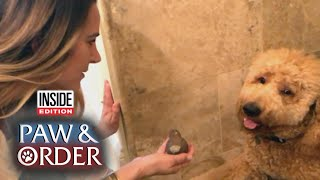 Paw & Order: Goldendoodle Whimpers While Questioned About Damaged Ceramic Bird