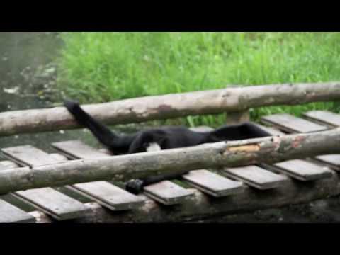 Zoo Parc Overloon - aapjes kijken