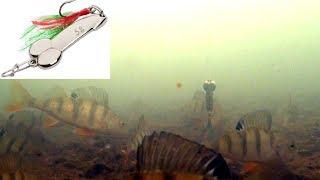 Хорошая камера для подледной рыбалки