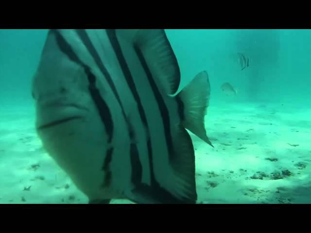 Amazing Navarre Beach Snorkel/Dive Reef 2015