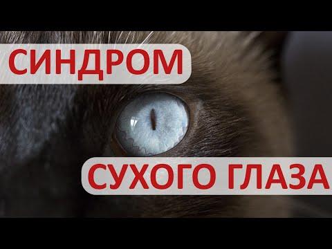 У питомца воспалились глаза. Что делать с синдромом сухого глаза?