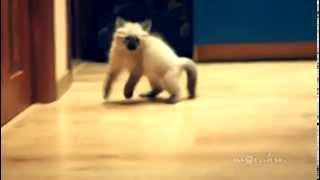 When Cats Attack / Страшнее кошки зверя нет! - Video Youtube