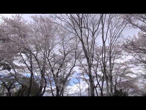 さくら 森岡小学校(大分市)