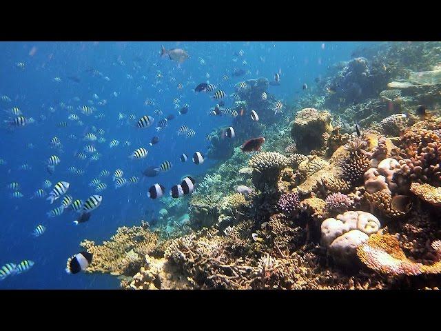 Snorkeling Angsana Ihuru House Reef Maldives