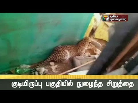 Leopard-attacks-four-people-in-Valsar-Gujarat