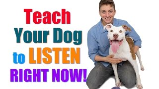 """How to Get Your UNFOCUSED Dog to LISTEN to You RIGHT NOW!  (""""Leave it""""/""""Look at Me"""" Combo)"""