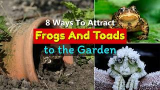 8 Ways To Attract Toads And Frogs To The Garden