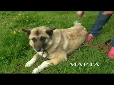 Дари добро помощь бездомным животным г. Киров