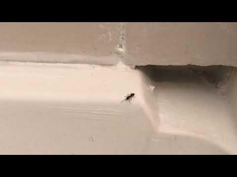 Gap in the Shower Door is Full of Ants in Freehold, NJ