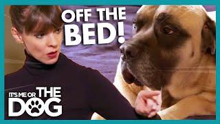 How to Get Dogs Off the Bed | It's Me or the Dog