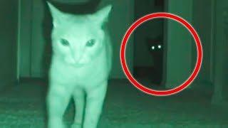 Вызов Духов - Призрак Кошки! Домашние Животные видят Призраков и Боятся!