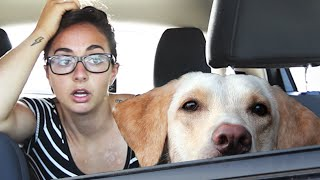 How Long Can You Leave Your Dog In The Car?