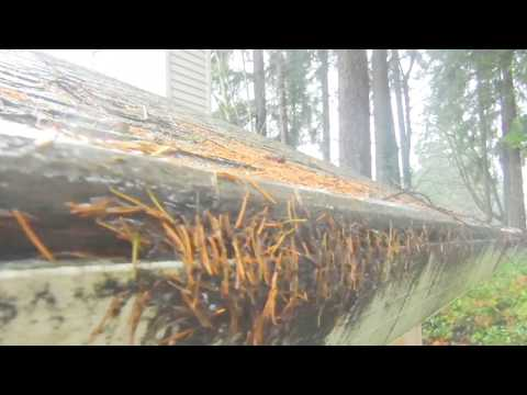 Gutter Helmet in the Seattle area with pine and fir needles. Note that according to them - this is NOT CLOGGED!See how we help you get educated about gutter guards and your choices at www.LeaflessInSeattle.com