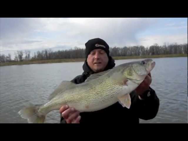 Fall Walleye – Blackwater Cats Red River Lake Winnipeg Greenback Walleye fishing guide Selkirk