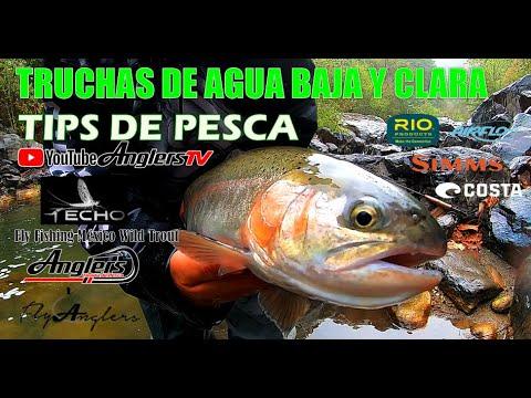Tips Pesca con Mosca Aguas Bajas y Claras / Fly Fishing México Truchas Silvestres 19