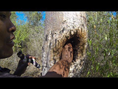 Spinnvilt: Her putter han armen inn i bikuben