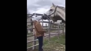 Лошадь потделка